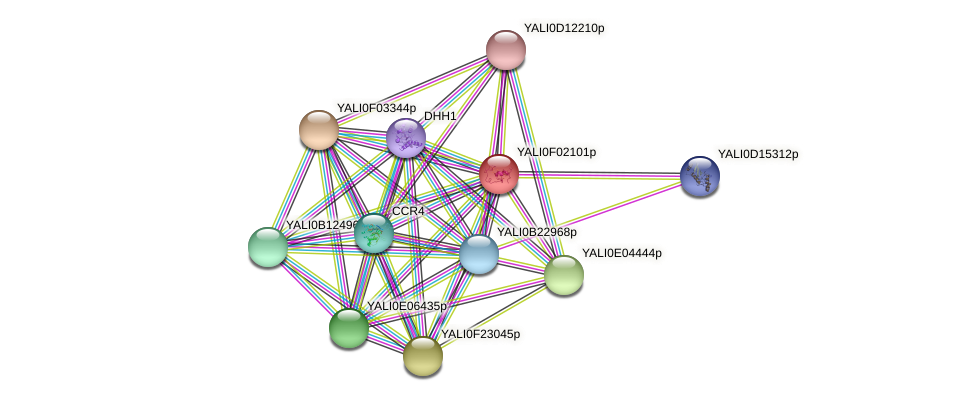 XP_504890.1 protein (Yarrowia lipolytica) - STRING interaction network