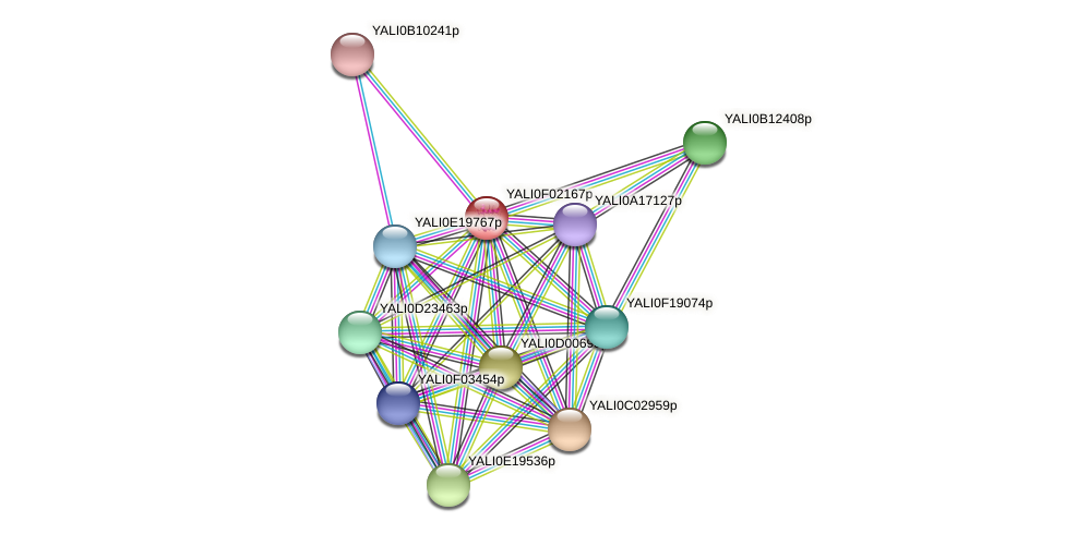XP_504893.1 protein (Yarrowia lipolytica) - STRING interaction network
