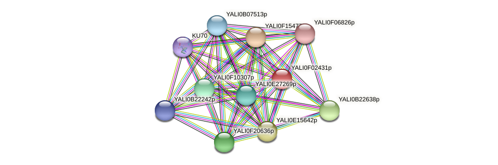 XP_504905.1 protein (Yarrowia lipolytica) - STRING interaction network