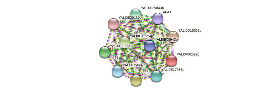 XP_504912.1 protein (Yarrowia lipolytica) - STRING interaction network