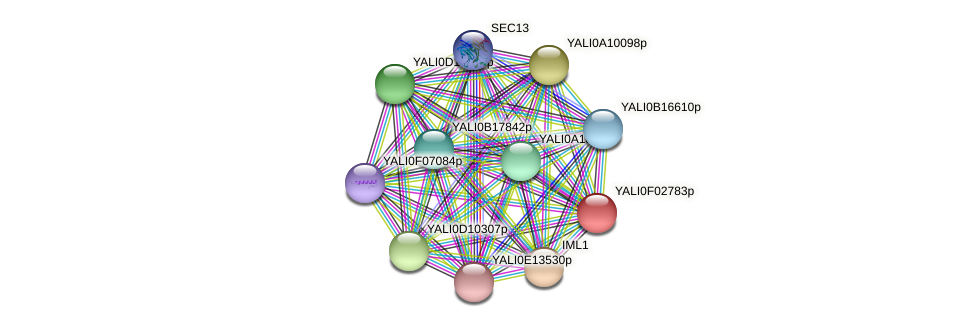 XP_504919.1 protein (Yarrowia lipolytica) - STRING interaction network