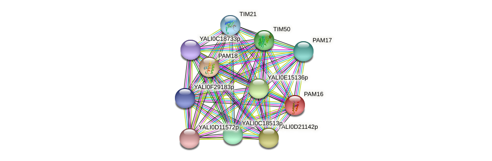 PAM16 protein (Yarrowia lipolytica) - STRING interaction network
