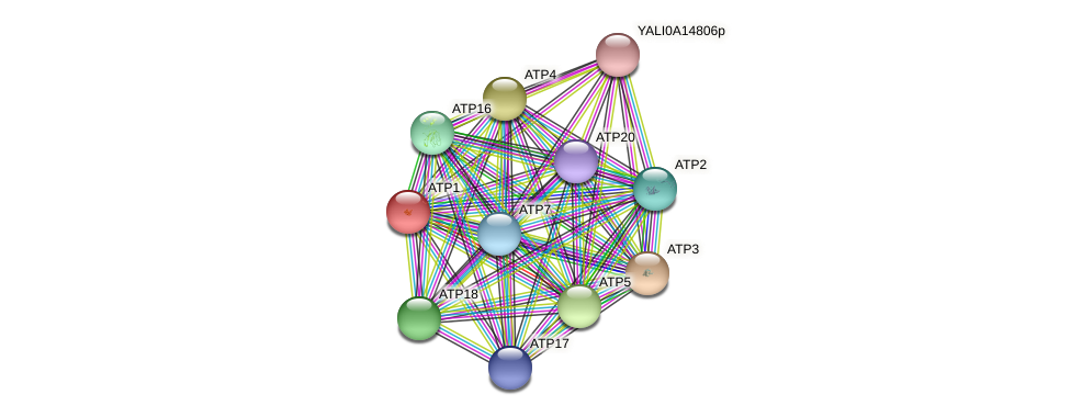 XP_504936.1 protein (Yarrowia lipolytica) - STRING interaction network