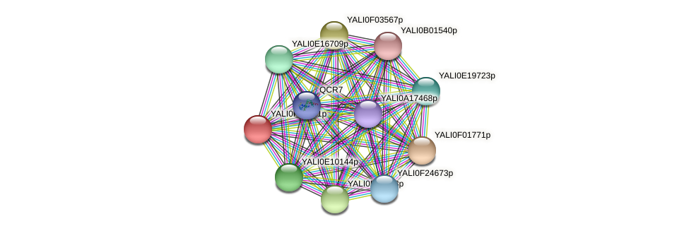 XP_504937.1 protein (Yarrowia lipolytica) - STRING interaction network
