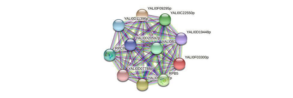 XP_504941.1 protein (Yarrowia lipolytica) - STRING interaction network