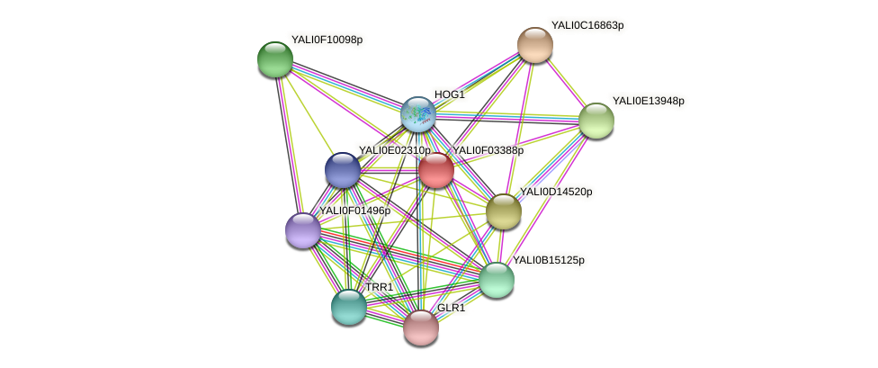 XP_504945.1 protein (Yarrowia lipolytica) - STRING interaction network