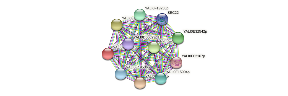 XP_504948.1 protein (Yarrowia lipolytica) - STRING interaction network