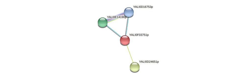 XP_504962.1 protein (Yarrowia lipolytica) - STRING interaction network
