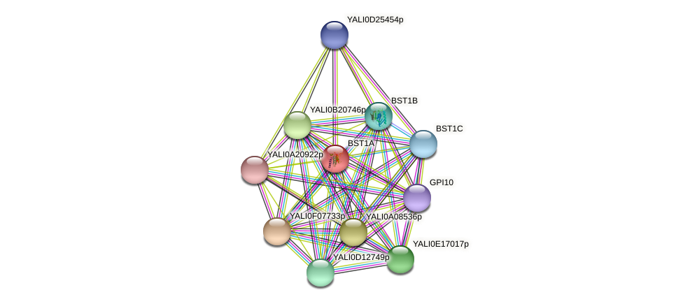 BST1A protein (Yarrowia lipolytica) - STRING interaction network