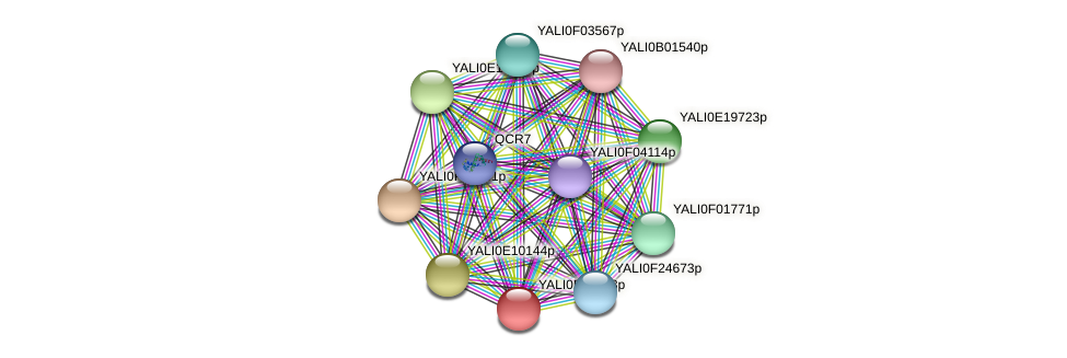XP_504979.1 protein (Yarrowia lipolytica) - STRING interaction network
