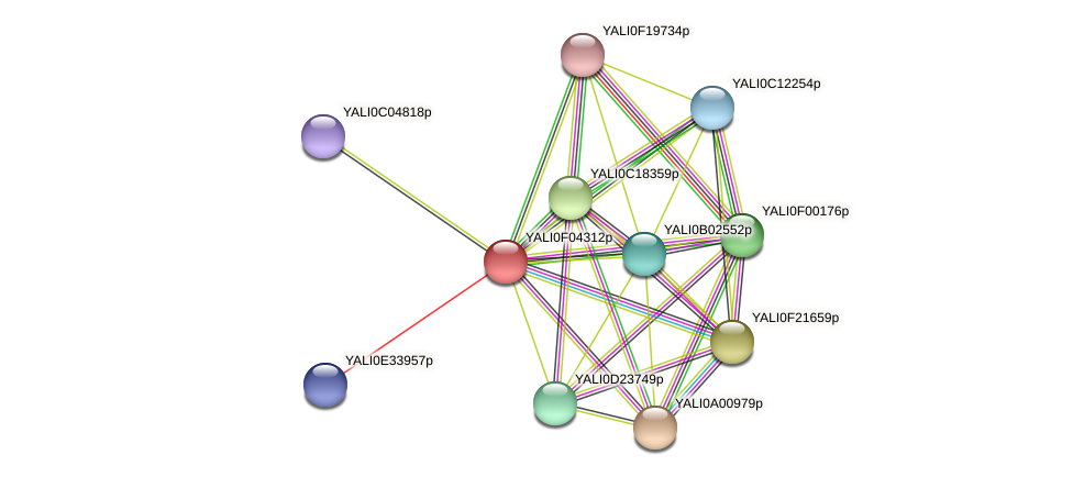 XP_504987.1 protein (Yarrowia lipolytica) - STRING interaction network