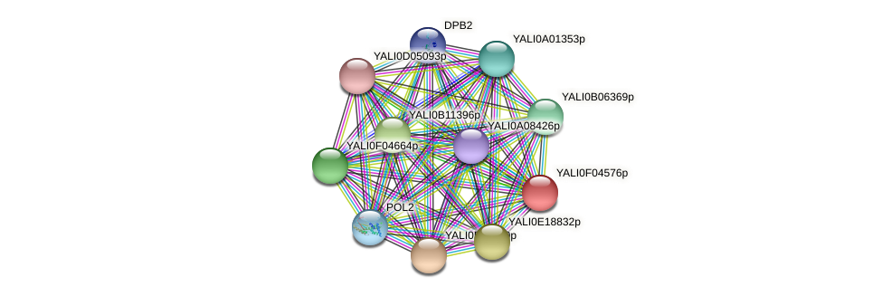 XP_504997.1 protein (Yarrowia lipolytica) - STRING interaction network