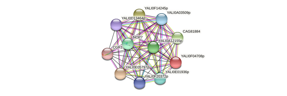 XP_505003.1 protein (Yarrowia lipolytica) - STRING interaction network