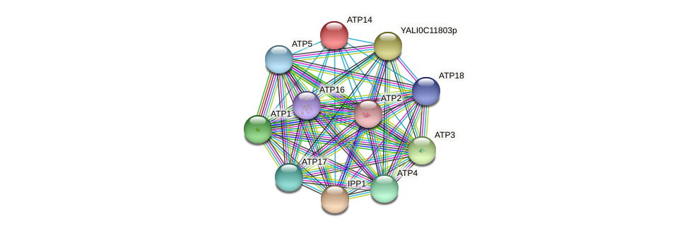 XP_505006.1 protein (Yarrowia lipolytica) - STRING interaction network