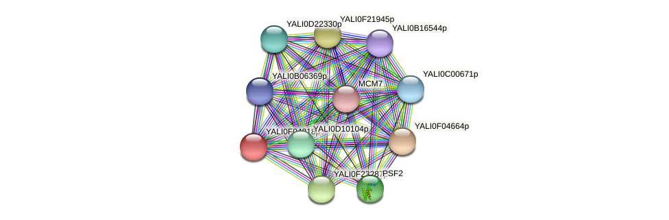 XP_505008.1 protein (Yarrowia lipolytica) - STRING interaction network