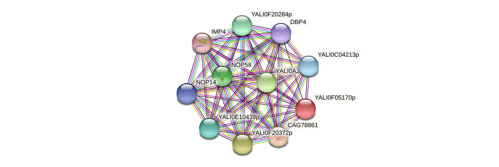 XP_505021.1 protein (Yarrowia lipolytica) - STRING interaction network