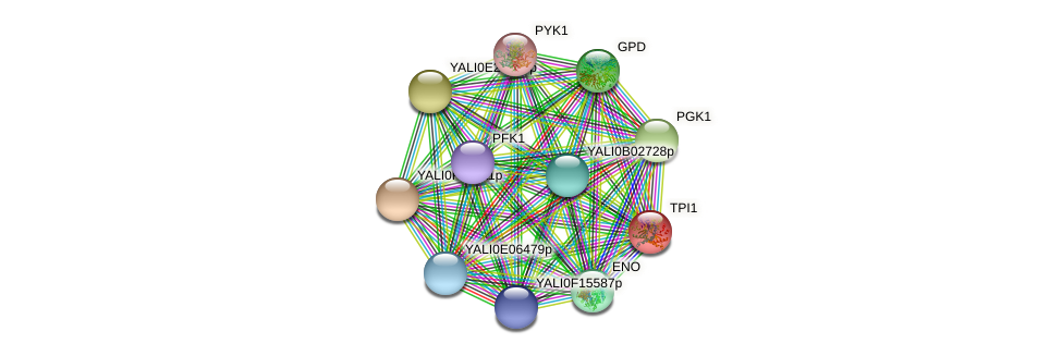 TPI1 protein (Yarrowia lipolytica) - STRING interaction network