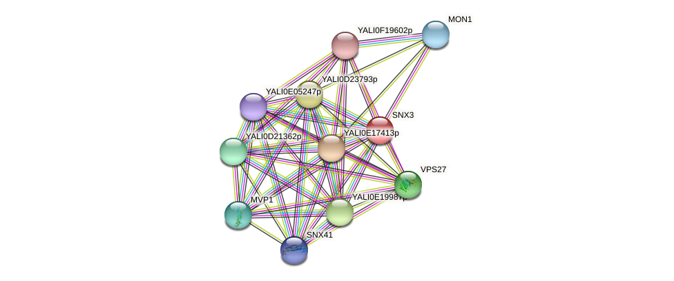 SNX3 protein (Yarrowia lipolytica) - STRING interaction network