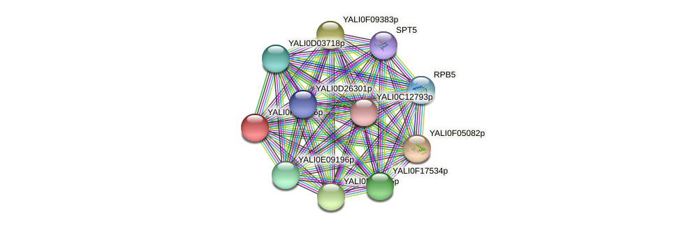 XP_505038.1 protein (Yarrowia lipolytica) - STRING interaction network