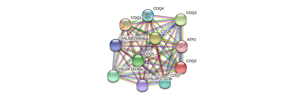 XP_505040.1 protein (Yarrowia lipolytica) - STRING interaction network