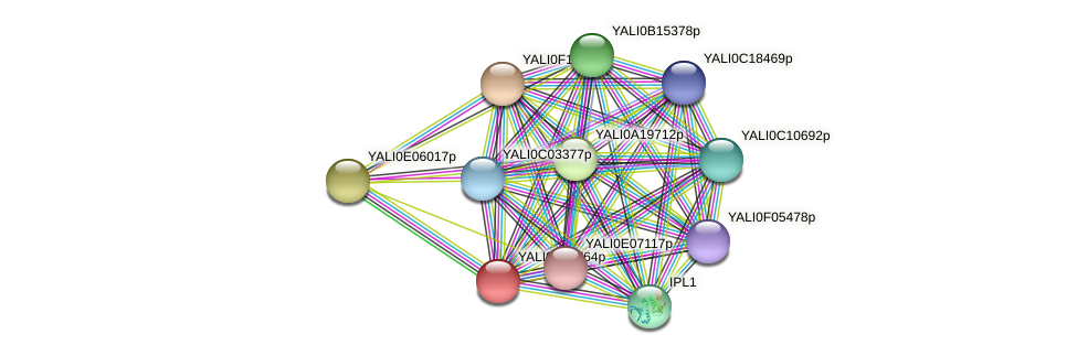 XP_505047.1 protein (Yarrowia lipolytica) - STRING interaction network