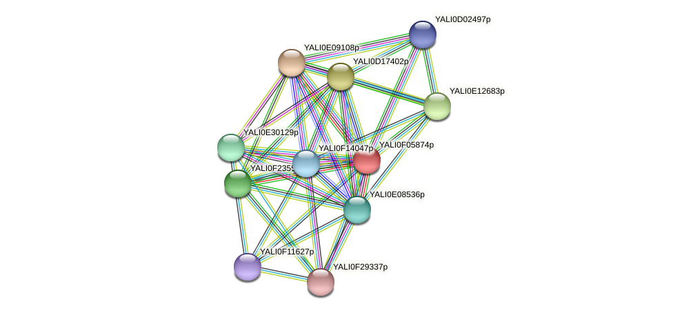 XP_505053.1 protein (Yarrowia lipolytica) - STRING interaction network