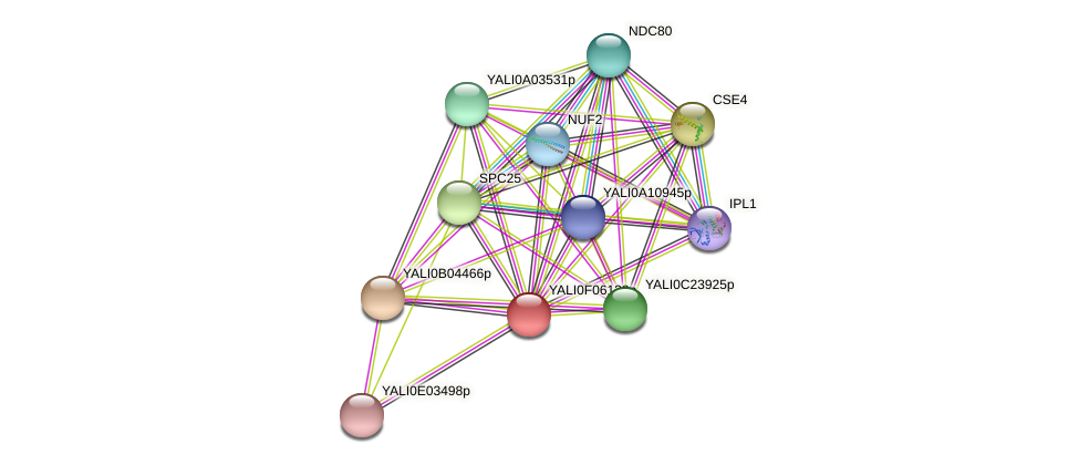 XP_505065.1 protein (Yarrowia lipolytica) - STRING interaction network