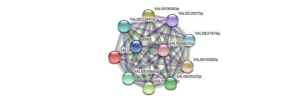 XP_505067.1 protein (Yarrowia lipolytica) - STRING interaction network