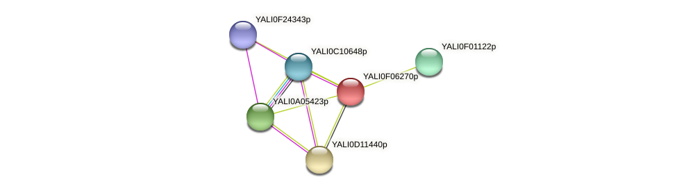 XP_505071.1 protein (Yarrowia lipolytica) - STRING interaction network