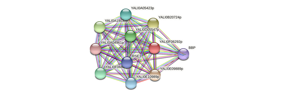 XP_505072.1 protein (Yarrowia lipolytica) - STRING interaction network