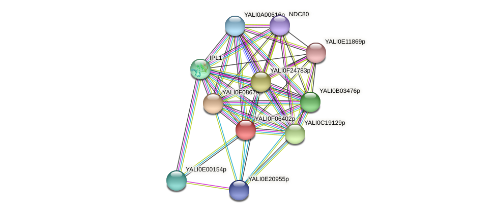XP_505078.1 protein (Yarrowia lipolytica) - STRING interaction network