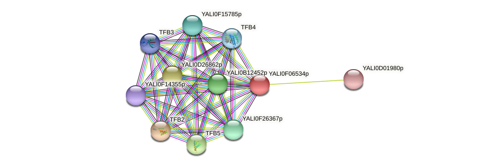 XP_505084.1 protein (Yarrowia lipolytica) - STRING interaction network