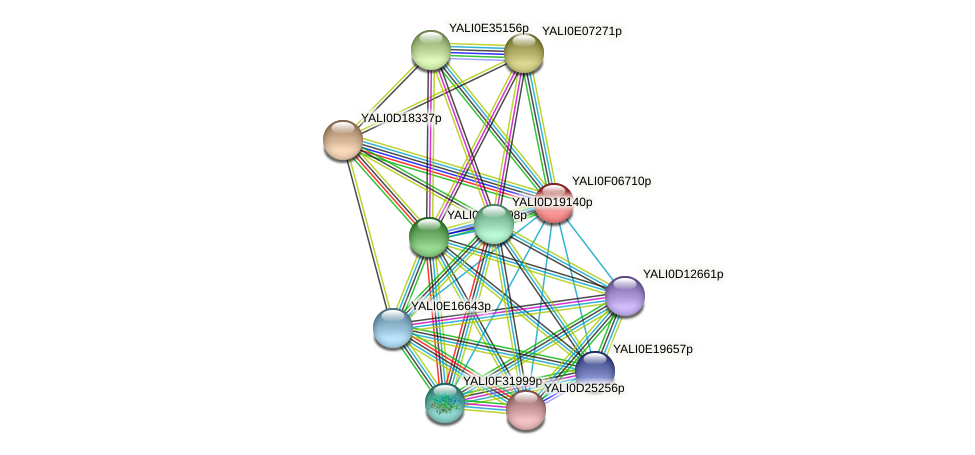 XP_505092.1 protein (Yarrowia lipolytica) - STRING interaction network