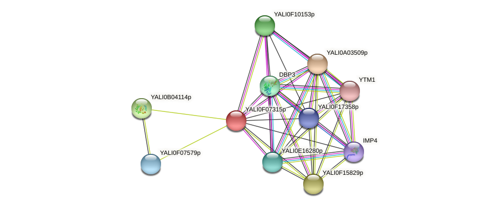 XP_505115.1 protein (Yarrowia lipolytica) - STRING interaction network