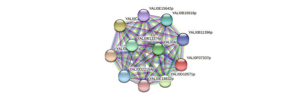 XP_505116.1 protein (Yarrowia lipolytica) - STRING interaction network