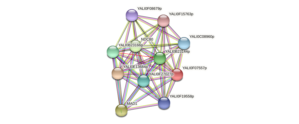 XP_505124.1 protein (Yarrowia lipolytica) - STRING interaction network