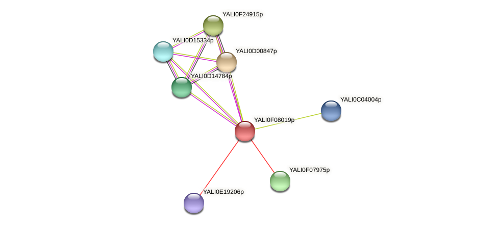 XP_505144.1 protein (Yarrowia lipolytica) - STRING interaction network