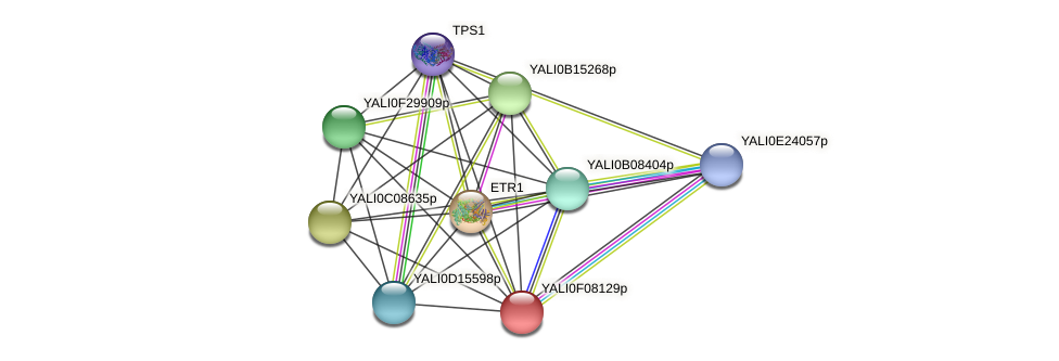 XP_505149.1 protein (Yarrowia lipolytica) - STRING interaction network