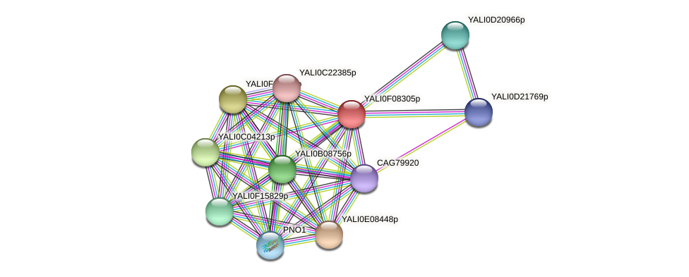 XP_505155.1 protein (Yarrowia lipolytica) - STRING interaction network