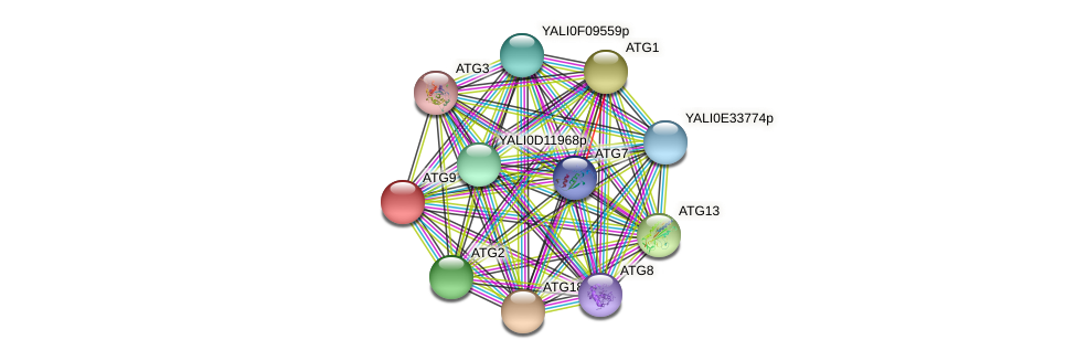 ATG9 protein (Yarrowia lipolytica) - STRING interaction network