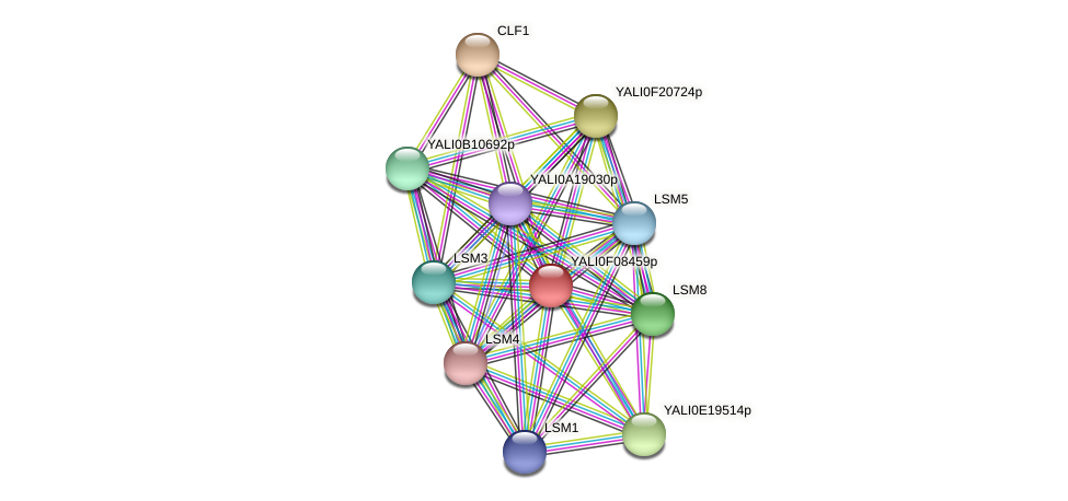 XP_505162.1 protein (Yarrowia lipolytica) - STRING interaction network