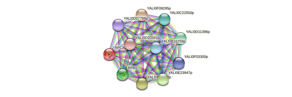 RPC82 protein (Yarrowia lipolytica) - STRING interaction network