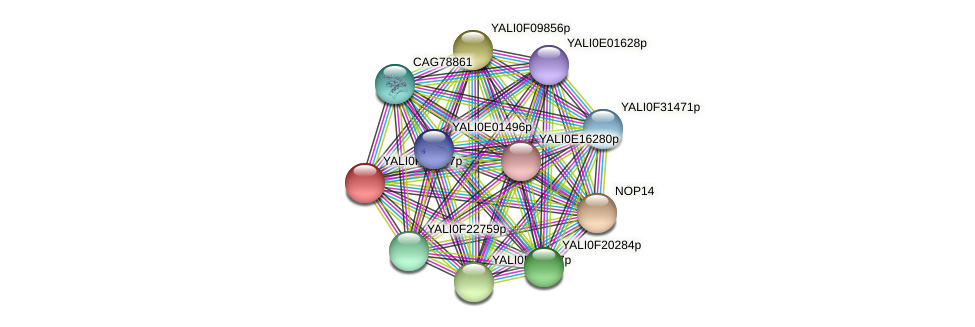 XP_505171.1 protein (Yarrowia lipolytica) - STRING interaction network
