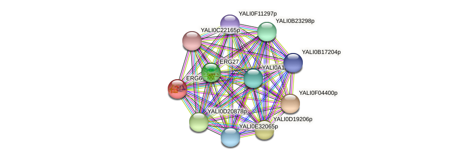 ERG6 protein (Yarrowia lipolytica) - STRING interaction network