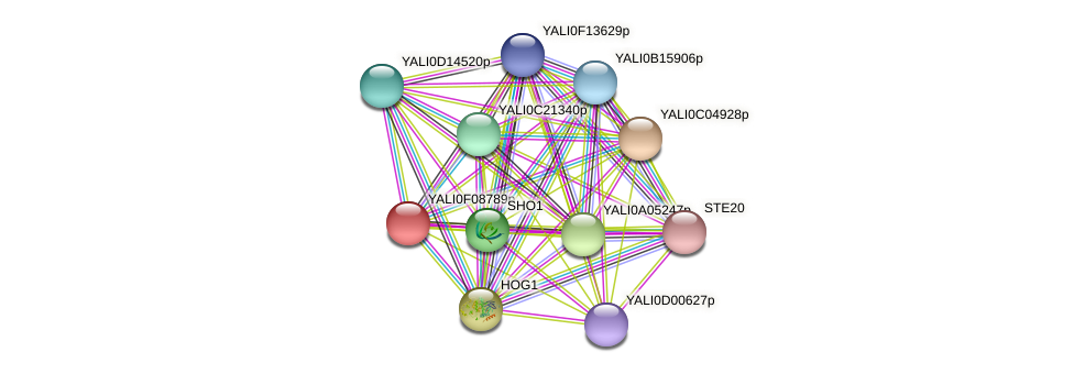 XP_505177.1 protein (Yarrowia lipolytica) - STRING interaction network