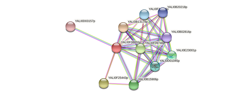 XP_505180.2 protein (Yarrowia lipolytica) - STRING interaction network