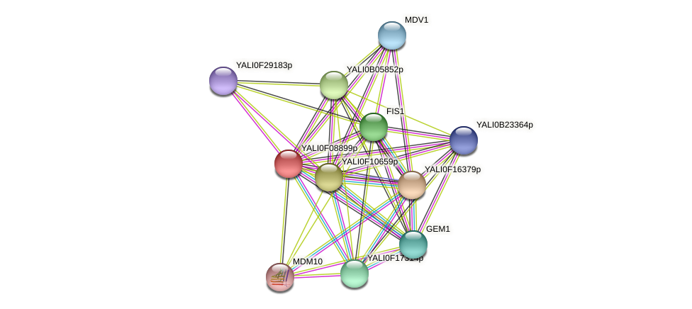 XP_505182.1 protein (Yarrowia lipolytica) - STRING interaction network