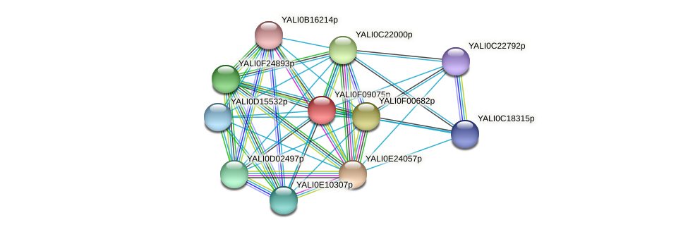 XP_505190.1 protein (Yarrowia lipolytica) - STRING interaction network