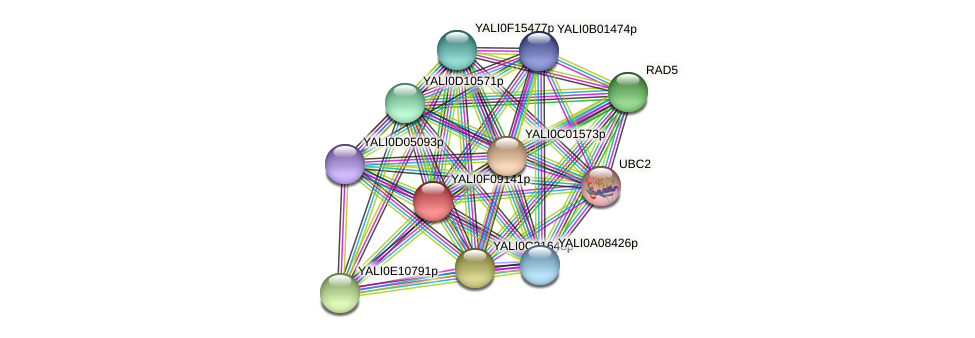 XP_505193.1 protein (Yarrowia lipolytica) - STRING interaction network