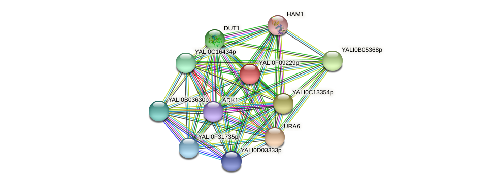 XP_505197.1 protein (Yarrowia lipolytica) - STRING interaction network